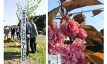 2019年 桜の植樹祭
